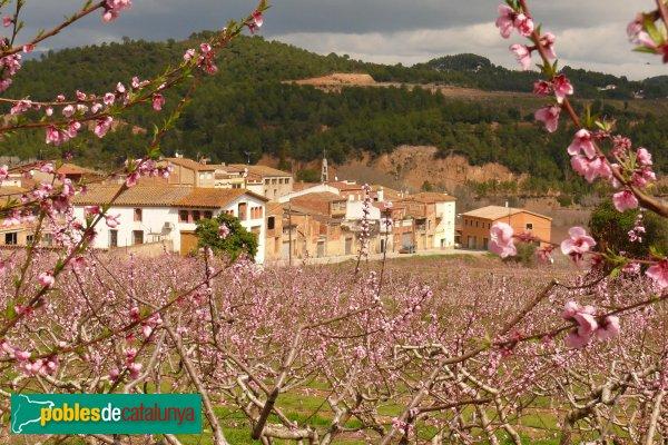 Piera - Presseguers florits a La Fortesa