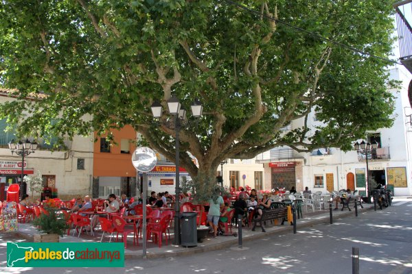 Colera - Plaça de Pi i Margall, amb l'arbre monumental